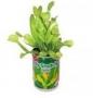 Masožravka - žravá rostlina