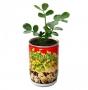 Vypěstuj si arašídy